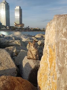 Who knew we would discover a family of cats living in the rocks at the beach in Barcelona? They blend into the rocks so well that we kept being surprised by another one staring at us.