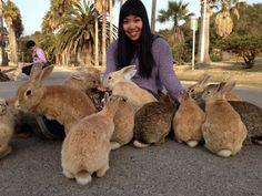 Фото - подорожі по світу: Остров кроликов Bunny Island, Rabbit Island, Cute Baby Bunnies, Cute Babies, 10 Interesting Facts, Go To Japan, Losing A Pet, Best Funny Pictures, Random Pictures