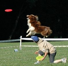 http://www.statsoft.com/support/blog/entryid/81/predictive-modeling-dog-catches-frisbee/