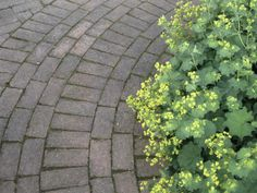 Create Clean Lines with Manufactured Paving Bricks