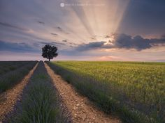Rays of light. Provence, France.