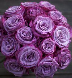 Интернет-магазин садовода ДЕЛЁНКА - Роза Moody Blues (Муди Блю) / Чайно-гибридная