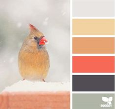 Design Seeds®  for all who ❤ color  winter tones - Google Chrome_2013-12-09_12-29-54-Optimized