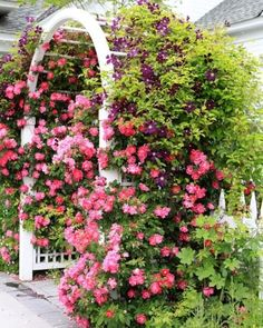 Meadowbrook Farm: This is how I want my roses and clematis to look. by mandy Garden Arbor, Garden Gates, Garden Landscaping, Garden Ponds, Landscaping Ideas, Outdoor Plants, Outdoor Gardens, Outdoor Spaces, Climbing Roses