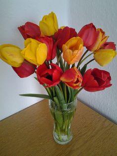 Helló Tavasz!!!