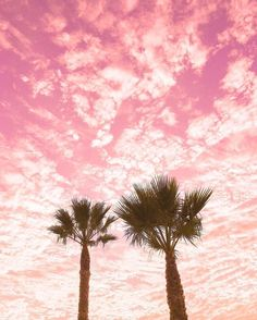 Image result for pink desert palm tree