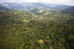 Establishing Guatemala's first network of nature reserves. Website: www.fundaeco.org.gt