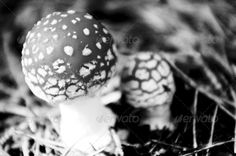 Two toadstools black and white horizontally