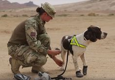 See a video of a British military dog gear up for front-line training.