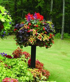 planter on a birdbath...looks like a topiary.  Love the colors