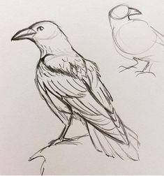 Drawing Doodles Sketchbooks by A raven appears! Bird Pencil Drawing, Crows Drawing, Bird Drawings, Animal Drawings, Pencil Drawings, Art And Illustration, Animal Sketches, Drawing Sketches, Sketching
