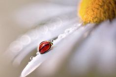 Macro insect photography by Lee Peiling