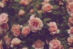 Mireia Jade: INSPIRATION: vintage flower.