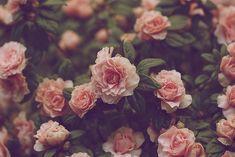 Ahh, la vie.: Inspirational - Flowers
