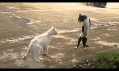 http://www.funny-videos.info/cats/