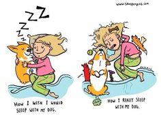 Sleeping with a corgi