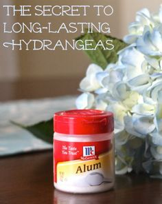 The Secret to Long-Lasting Cut Hydrangea Blooms