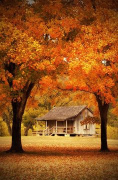 Fall cabin fever
