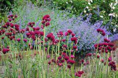 Amberley Open Gardens 2012   Flickr - Photo Sharing!