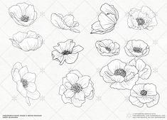 VECTOR Poppy Blossoms Illustrations by Fire Spark Studios on @creativemarket