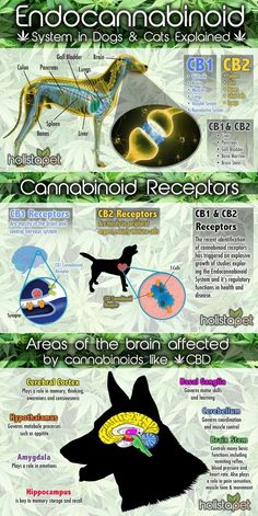 Endocannabinoid System in Dogs & Cats Explained #infographic #Animals #Cats #Dogs