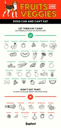 Homemade Dog Food - Unsure if your dog can eat that fruit or veggie? Here's 39 vegetables and fruits dogs can eat and can't eat with a bonus fridge graphic. Fruit Dogs Can Eat, Foods Dogs Can Eat, Fruits For Dogs, Dog Fruit, Foods Bad For Dogs, Human Food For Dogs, Dog Treat Recipes, Healthy Dog Treats, Dog Food Recipes