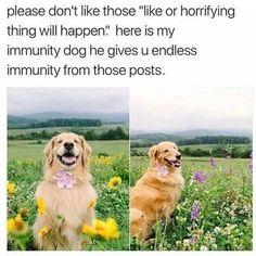 "Premium Dog Training 🐕 trên Instagram: ""Soo sweet! 💕 Follow us (@desirabledog) for more! 🐶 - Tags: #mydogismy #dogsofinstagram #petzzrule #todayfanphoto #petoftheday…"""