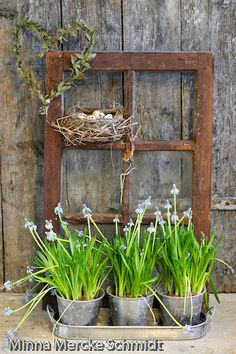 Old Window...filled with a prim nest.