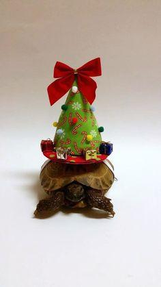 My Tortoise Hats in the Wall Street Journal by DeerwoodCreekGifts   www.facebook.com/NeiltheTortoise  www/twitter.com/NeiltheTortoise www/facebook.com/DeerwoodCreekGifts www/twitter.com/DeerwoodCreek