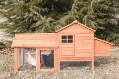 The Leghorn Cottage 2-3 Chickens!