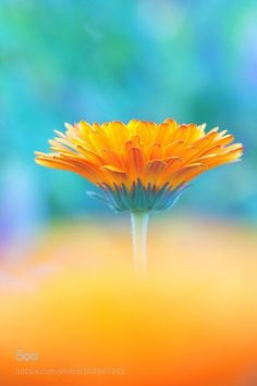 Photograph Dream flower by Tim Lai on Beautiful Flowers Wallpapers, Scenery Photography, Language Of Flowers, Orange And Turquoise, Bright Spring, What A Wonderful World, Flower Wallpaper, Pretty Flowers, Pretty Pictures