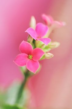 Flowers Nature, Pretty Flowers, Pretty In Pink, Pink Flowers, Nice Flower, Exotic Flowers, Beautiful Flowers Wallpapers, Flower Wallpaper, Flower Photos