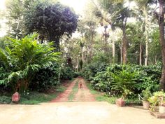 homestay in coorg - http://www.vintage-obsession.com/eat-pray-swim-coorg/