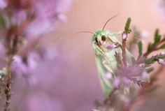 Colourfull Moth by Thijs van den Burg