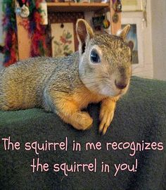 The squirrel in me recognizes the squirrel in you!