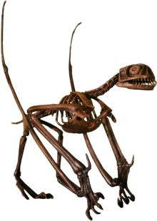 Jeholopteris - a small anurognathid pterosaur from the Middle to Late Jurassic, China.