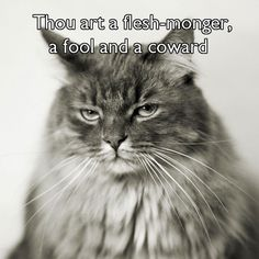 "kat-howard: "" dbvictoria: "" Shakespearean insults, with cats. 7 more here. "" I did not realize how very perfect cats were at delivering Shakespeare's insults until now. Shakespeare Insults, Shakespeare Quotes, William Shakespeare, British Literature, Inspirational Books, Sarcastic Quotes, Cat Memes, The Funny, Make Me Smile"