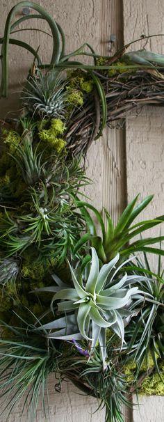 The Rainforest Garden: DIY Mossy Tillandsia Wreath