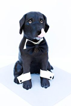 Dog Cake by Amber McKenney - For all your cake decorating supplies, please visit craftcompany.co.uk