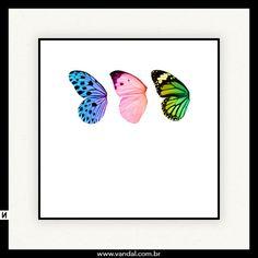 asas, borboleta, cores