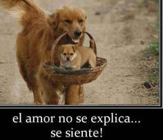 imagenes de perritos tiernos con frases de amor
