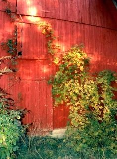 Photo old BARN DOOR