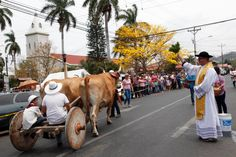 Oxcart parade 2016, Atenas.  Beautiful picture!!