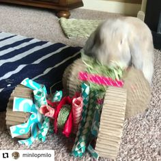 Rabbit Toy Hay Stuffed Rolling Toy! Great for Guinea Pigs and Chinchillas too! Reusable Great Hay Stuffed Toy! Hide treats in it for more excitement! Watch Milo enjoy his Hay Roller! Thanks Rachel @minilopmilo Natural Hay Roller Now on Amazon!   Click Link Above