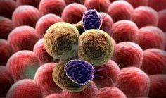 Nanopartículas de la Antártida servirían para marcar células tumorales | NUESTROMAR