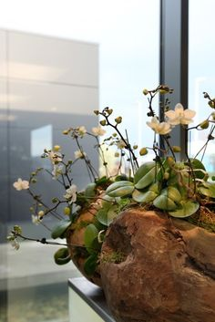 mini orchid display