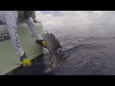 Awesome Sailfish Released aboard GOOD DAY in Costa Rica!