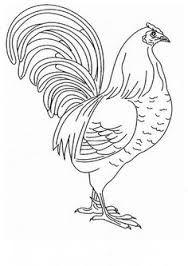 Resultado de imagen para pencil drawings of roosters