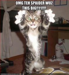Caturday - I Can Has LOLcats