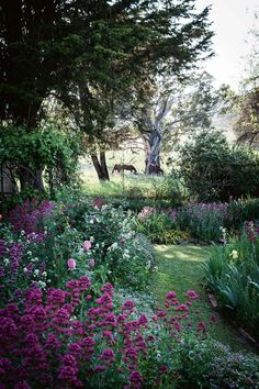 Farm garden landscaping ideas from Nundle, NSW A move to the country has brought three generations t Beach Gardens, Farm Gardens, Outdoor Gardens, Outdoor Rooms, Garden Cottage, Garden Beds, Landscape Design, Garden Design, Wisteria Plant